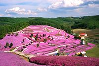 四川泯东·樱花谷旅游度假小镇