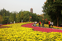 红豆集团红豆文化旅游策划